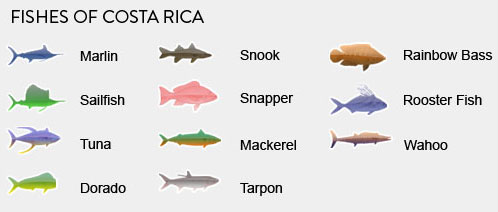 costa-rica-legend-fish